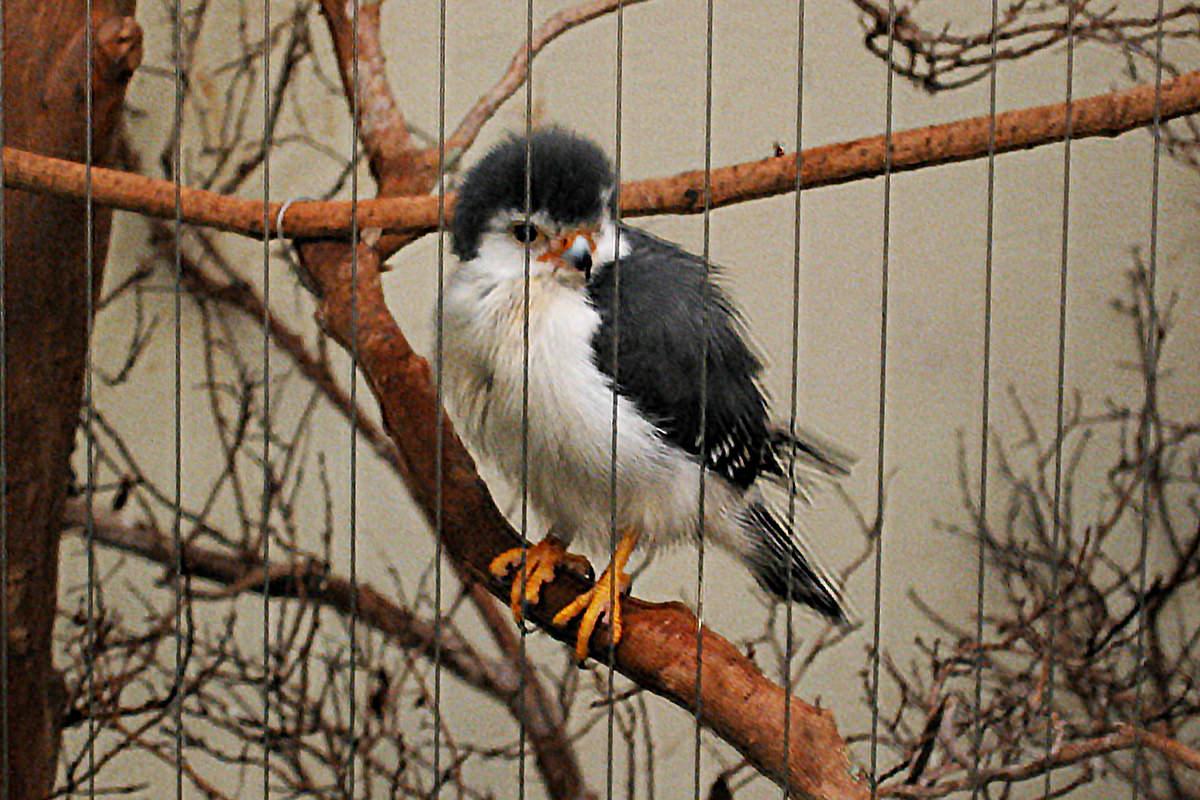 Fuzzy Bird.