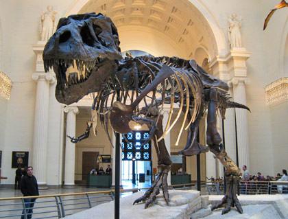 Dinosaur Sue