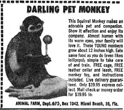 Monkeys by Mail!