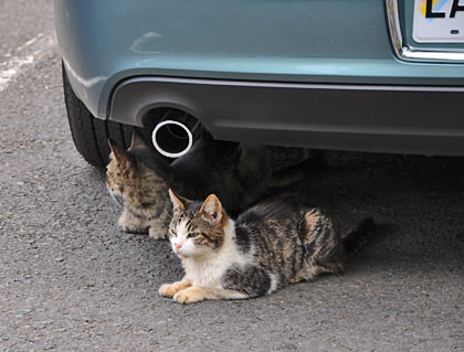 Iao Needle Cats