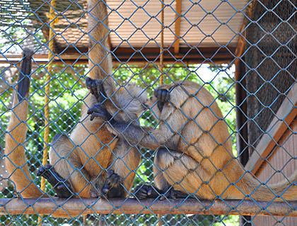 Carlos and Montana Monkeys