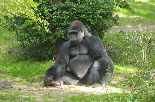 Animal Kingdom: Ape Break