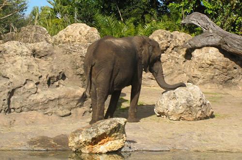 Animal Kingdom: Elephant Rest