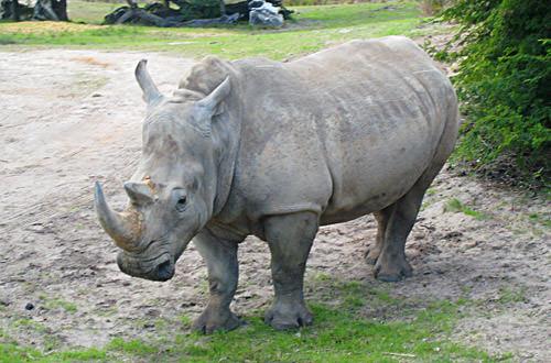 Animal Kingdom: Rhino Crossing