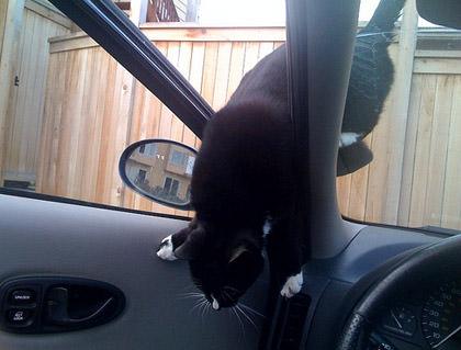 Psycho Cat breaks in my car