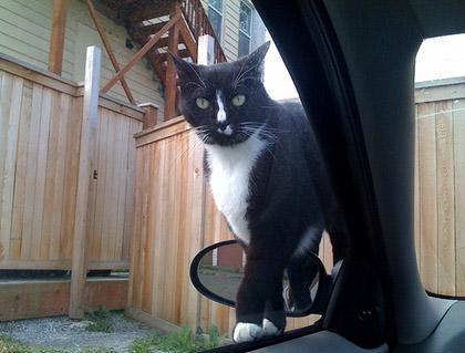 Psycho Cat on my car door