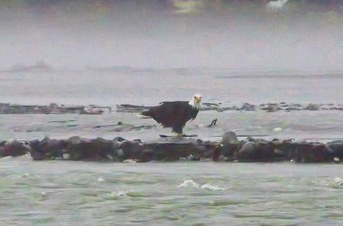 It's an Eagle!