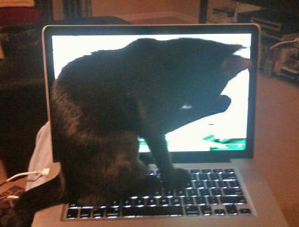 Kitty on My Laptop