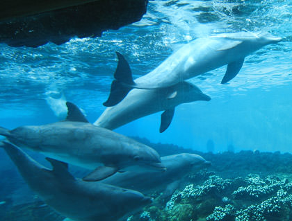 More Sea World dolphins.