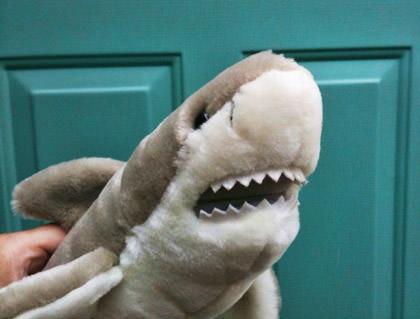 Jake the Shark