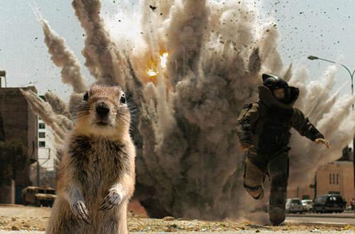 Crasher Squirrel in The Hurt Locker