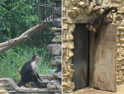 Monkey Island at the Ralph Mitchell Zoo