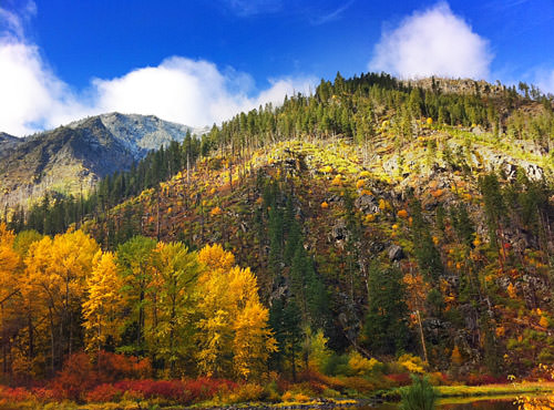 Wenatchee River Fall Colors