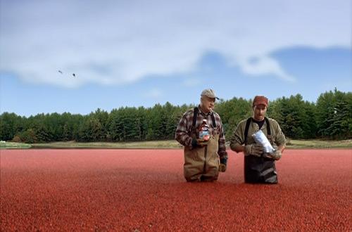 Cranberry Bog Farmers