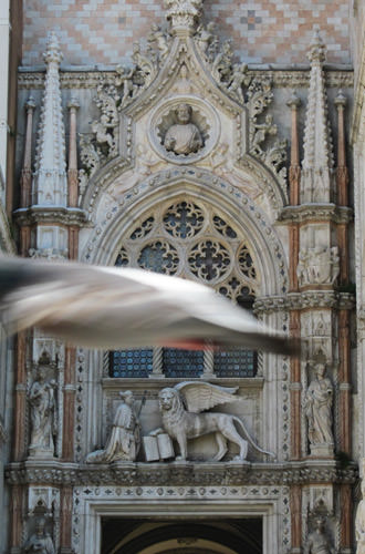 Bird flies into my shot of the Doge's Palace door!