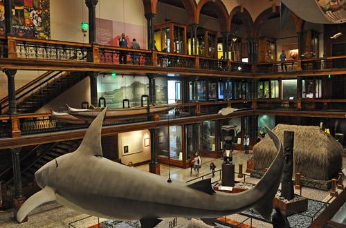Bishop Museum Interior