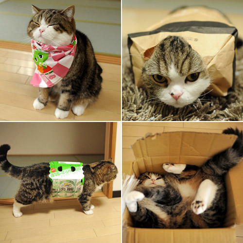 Maru Photos