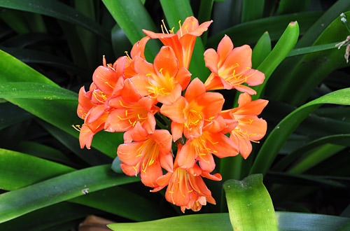 Royal Botanic Gardens Flowers