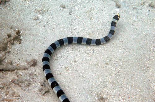 Sea Snake!