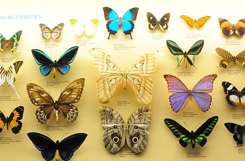 Pretty Dead Butterflies