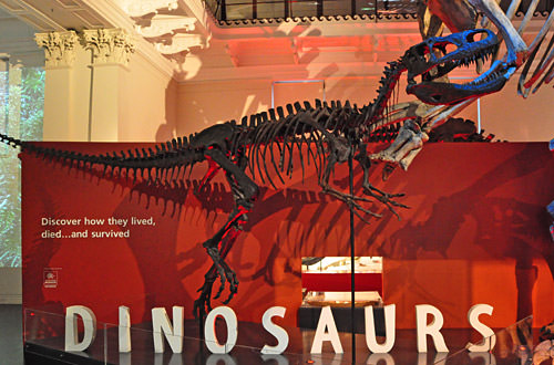 Dinosaurs Bones!