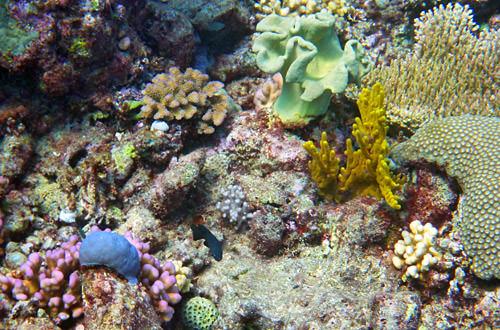 Dive Corals
