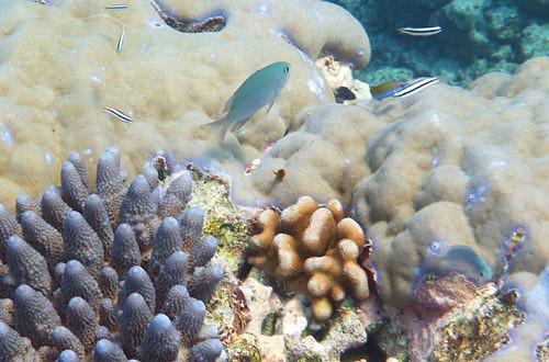 Turquoise Fishy