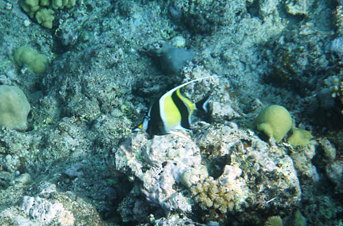 Yellow and Black Fishy