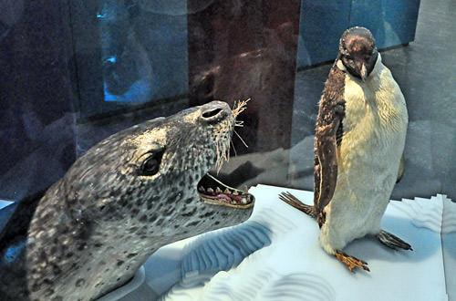 Seal vs. Penguin... FIGHT!