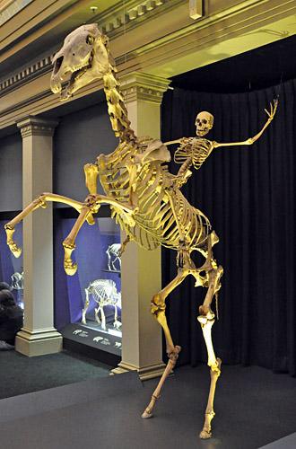 Skeleton Man Riding a Skeleton Horse