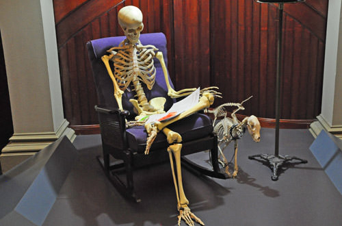 Skeleton Sitting in a Chair Reading