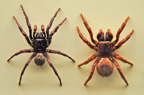 Very Scary Spiders