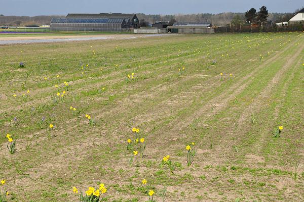 Empty Bulb Field NOT