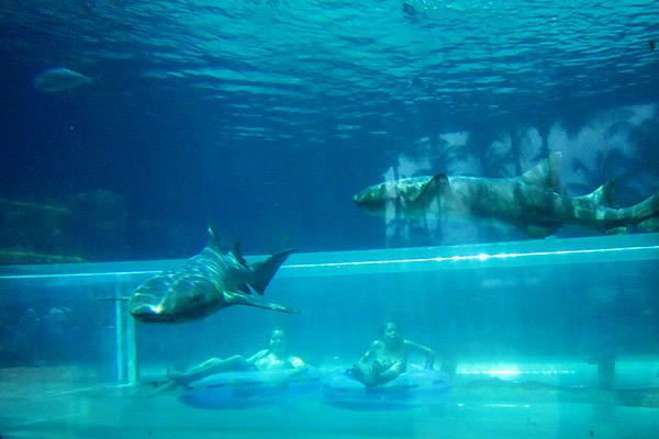 Atlantis Shark Tank