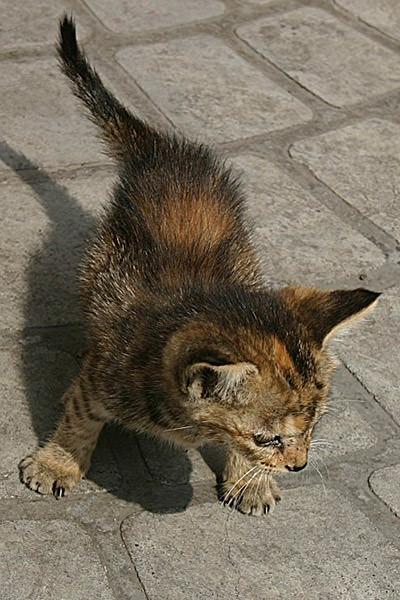 Shanghai Kitty