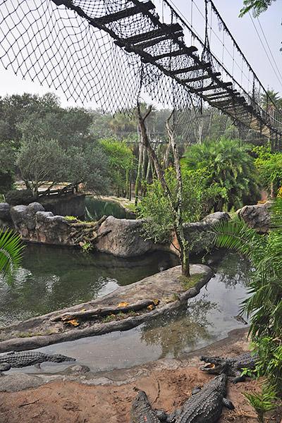 Bridge Gators