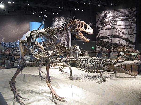 Natural History Museum of Utah Dinos