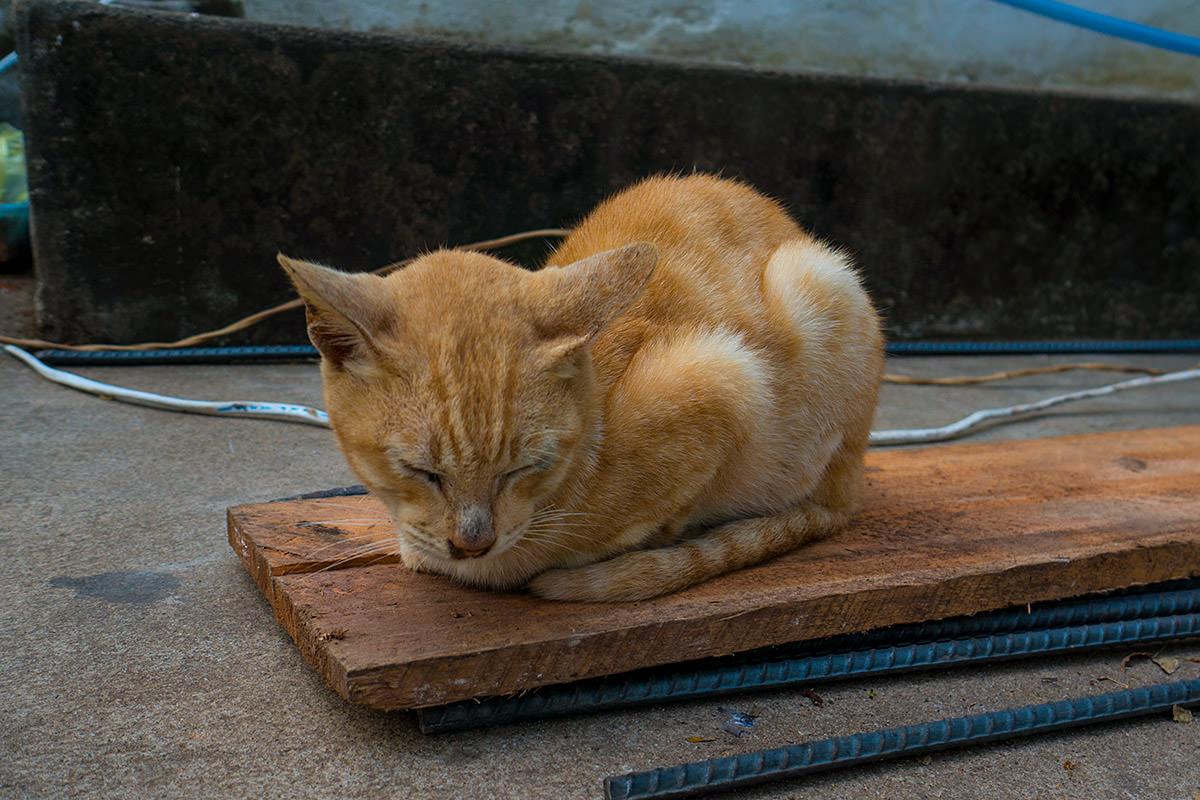 Temple Climb Kitty