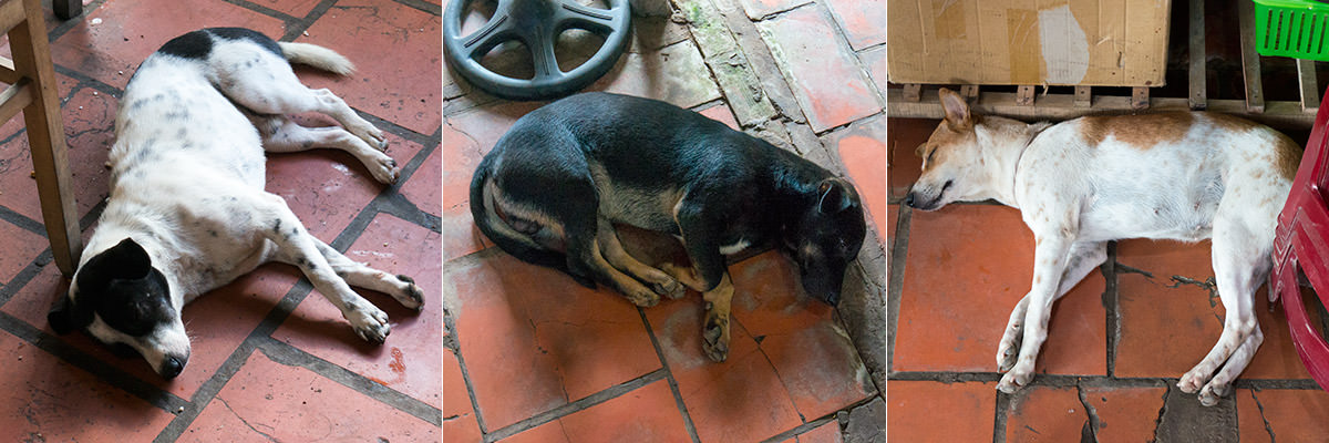 Mekong Dogs of Vietnam