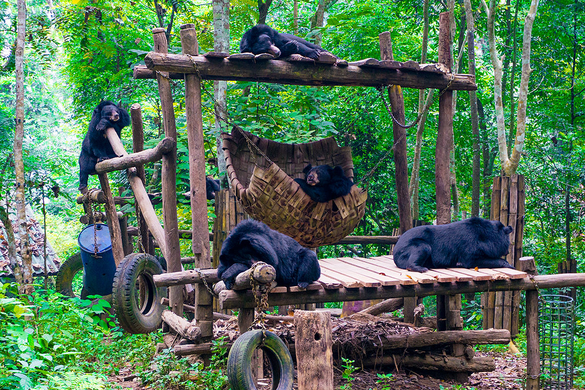 Bear Rescue Bears