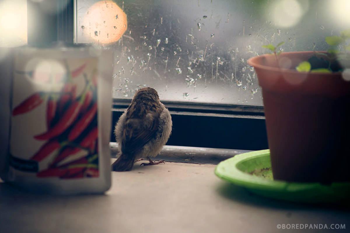 Bored Panda Bird Waits by a Window