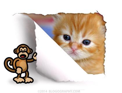 Monkey Kitty!