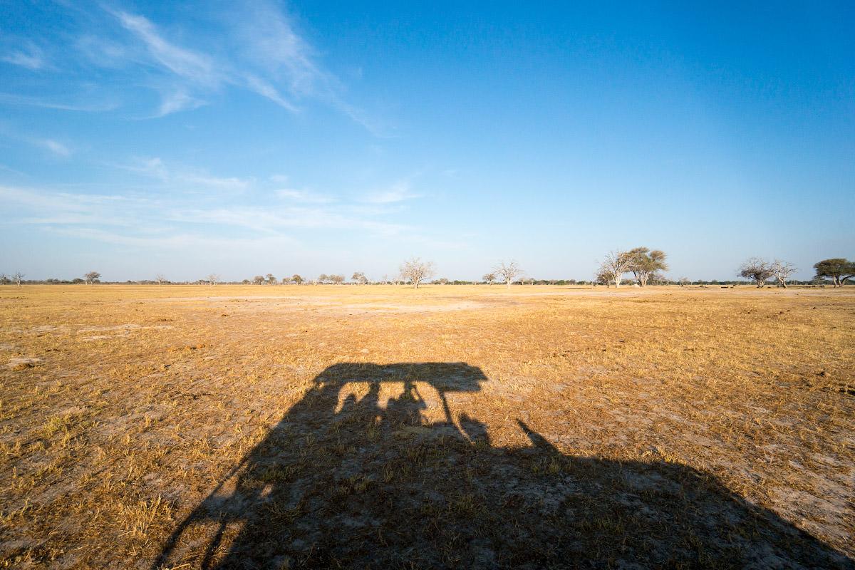 Hwange Plains
