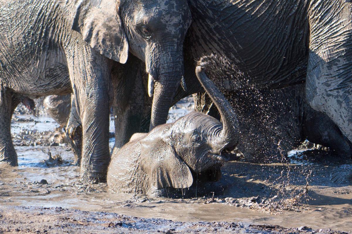 Hwange Baby Elephant