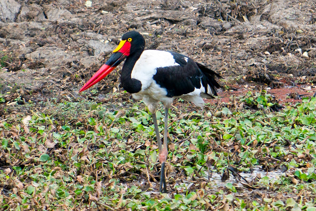 Bird in Zimbabwe