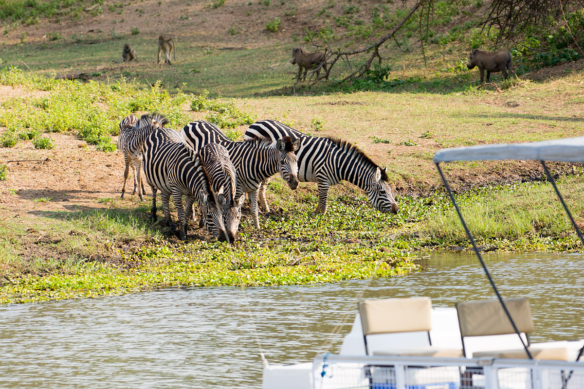 River Cruise Wildlife