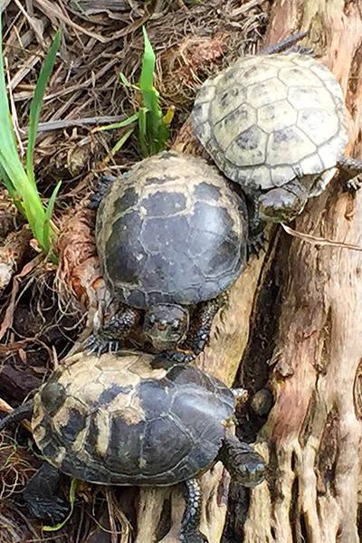 San Diego Zoo Turtles