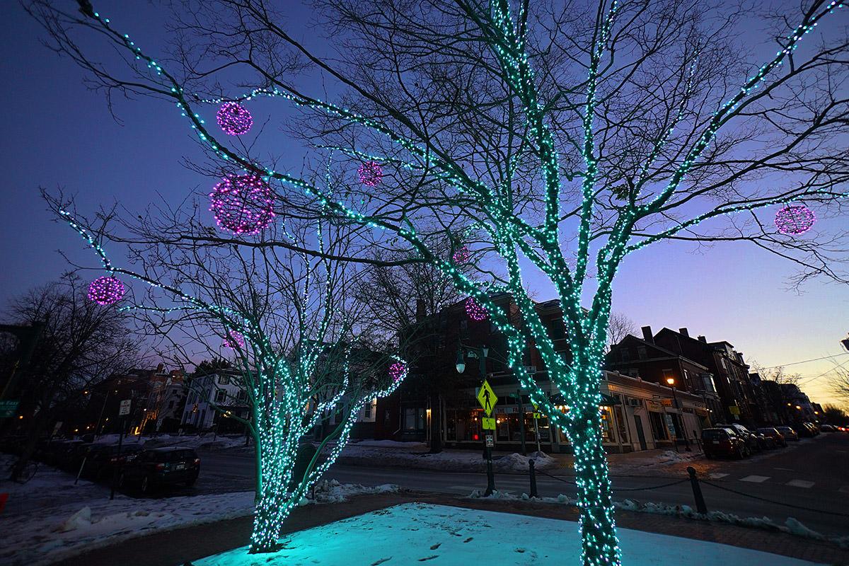 Portland Holiday Tree Lights