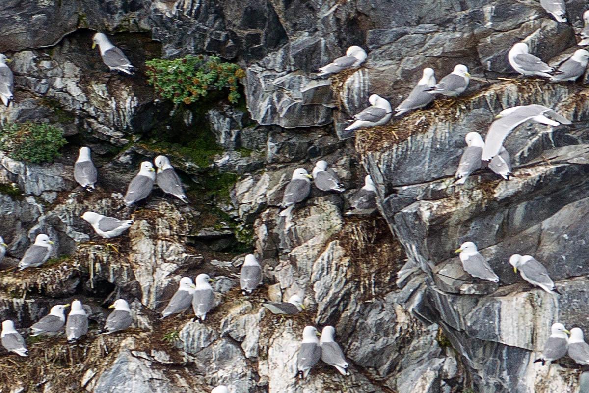 Glacier Cruise Alaska Birds