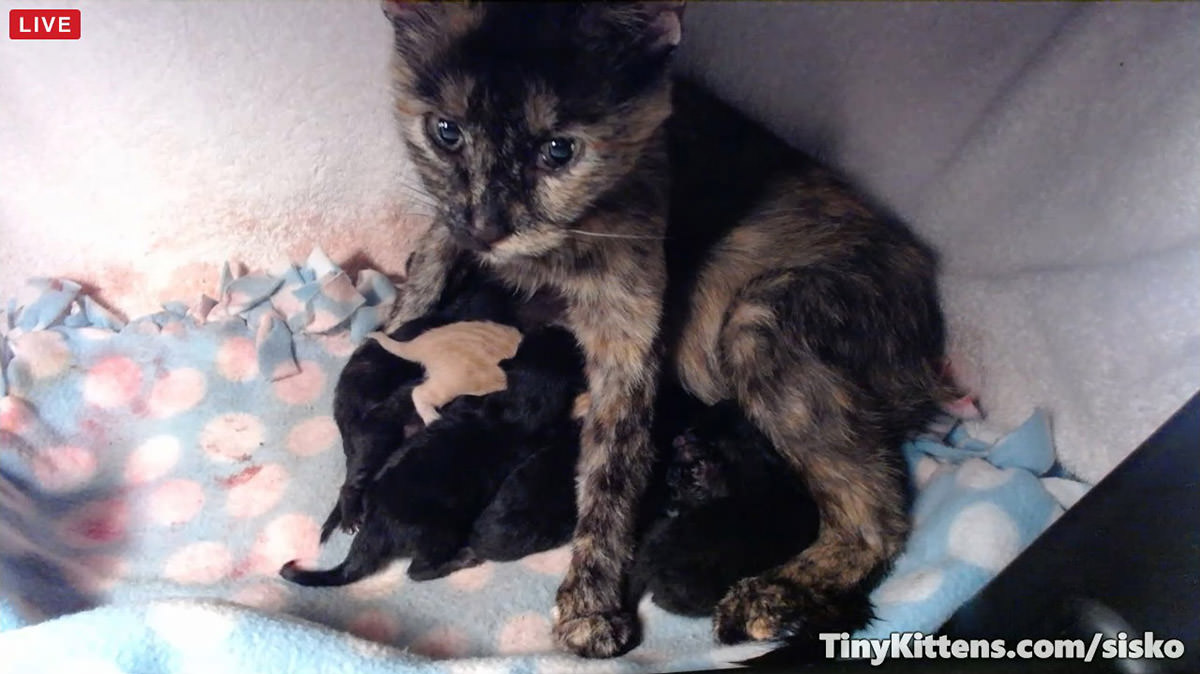 Sisko and her babies...